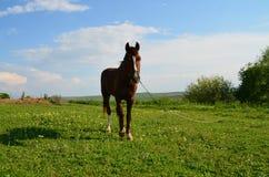 Koń Zdjęcie Royalty Free