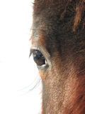koń abstrakcyjne twarz Obraz Royalty Free