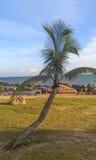 Końcówki ziemscy kokosowi drzewa Zdjęcie Royalty Free