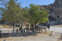 Koń, cappadocia, natura, indyk Obraz Stock