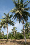 Ko Chang island landscape. Scenic landscape of Ko Chang island with palm trees in foreground Stock Image