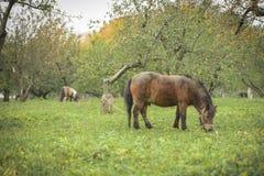 Koń chodzi w polu Zdjęcia Royalty Free
