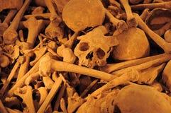 kości czaszki Obraz Stock