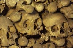 kości czaszki Obraz Royalty Free