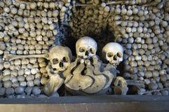 kości sculls Obraz Stock