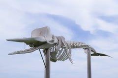 Kościec sperma wieloryb - ekologiczny pomnik na Fuerteventura Zdjęcie Royalty Free