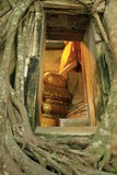 kościelni korzenie otaczali tajlandzkiego drzewa Zdjęcie Royalty Free