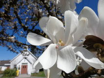 Kościelny kwiat obrazy royalty free