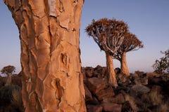 kołczan tree2 Obraz Stock