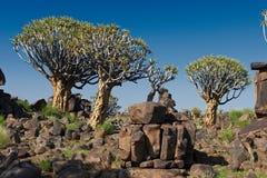 Kołczanu drzewa las Zdjęcia Stock