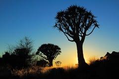 Kołczanu drzewa sylwetka Fotografia Stock