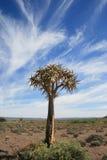kołczanu drzewo Fotografia Stock