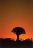 kołczanu drzewo Zdjęcia Royalty Free