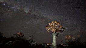 Kołczanu drzewo pod gwiazdami Fotografia Royalty Free