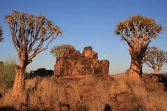 Kołczanu drzewo w Namibia Fotografia Royalty Free