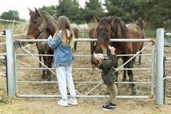 Koń daje buziakowi 10 roczniaka dziewczyna Obrazy Royalty Free