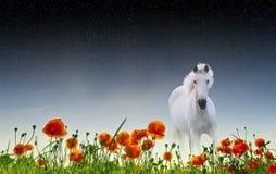 koń dziki Obrazy Royalty Free