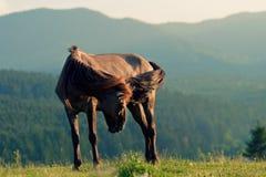 koń dziki Fotografia Stock