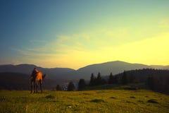 koń dziki Zdjęcie Stock