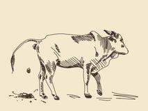Ko för handteckningszebu royaltyfri illustrationer