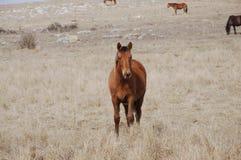 koń góry Obraz Royalty Free