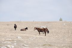 koń góry Zdjęcia Stock