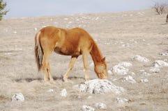 koń góry Zdjęcie Royalty Free