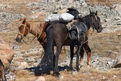 koń góry Obrazy Stock