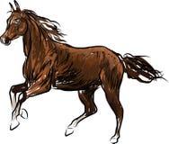 Koń galoping w naturze ilustracji