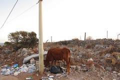 Ko i avfallsen arkivfoton