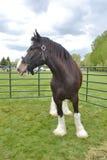 Koń i burza Zdjęcia Royalty Free