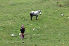 Koń i dama w polu Obrazy Stock