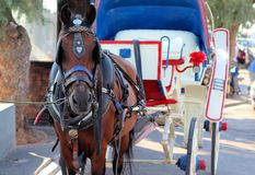 Koń i fracht Fotografia Stock
