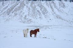 Koń i jezioro Zdjęcie Stock