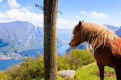 Koń i jezioro Obraz Stock