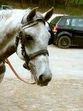 Koń i koń mechaniczny. Obraz Royalty Free