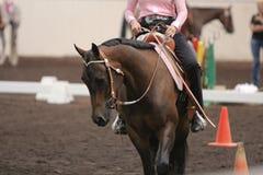 Koń jedzie Obraz Royalty Free