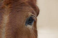koń jest głównym Zdjęcia Stock