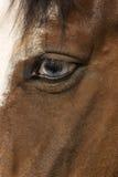 koń jest oko zdjęcia stock