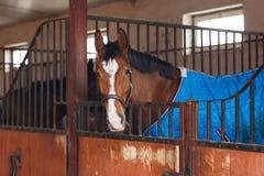Koń jest ubranym koc Fotografia Royalty Free