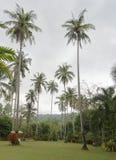 Ko Kut, Thailand 25,2018 Februari: Kokospalmen op de kokosnoot Stock Foto's