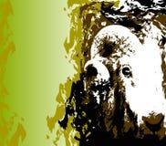 Koźli portret Fotografia Royalty Free