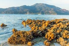 Ko Lipe Tarutao Marine Park Thailand nazionale fotografia stock libera da diritti