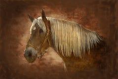 koń malowaniu Obraz Royalty Free