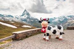Ko nära Matterhornen, Schweiz Arkivfoto