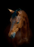 Koń na czerni Zdjęcia Royalty Free