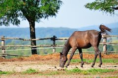 Koń na gospodarstwie rolnym Obrazy Stock