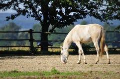 Koń na gospodarstwie rolnym Obraz Stock