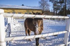 Koń na Momarken Fotografia Royalty Free