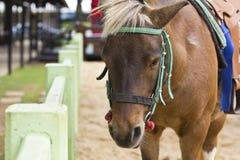 Koń na rolnym Chokchai Zdjęcie Stock